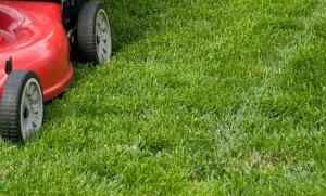 Lawn Mowing Tottenham