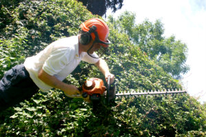 Trimming the Hedges