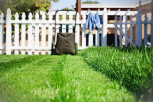 grass-cutting-services-tottenham